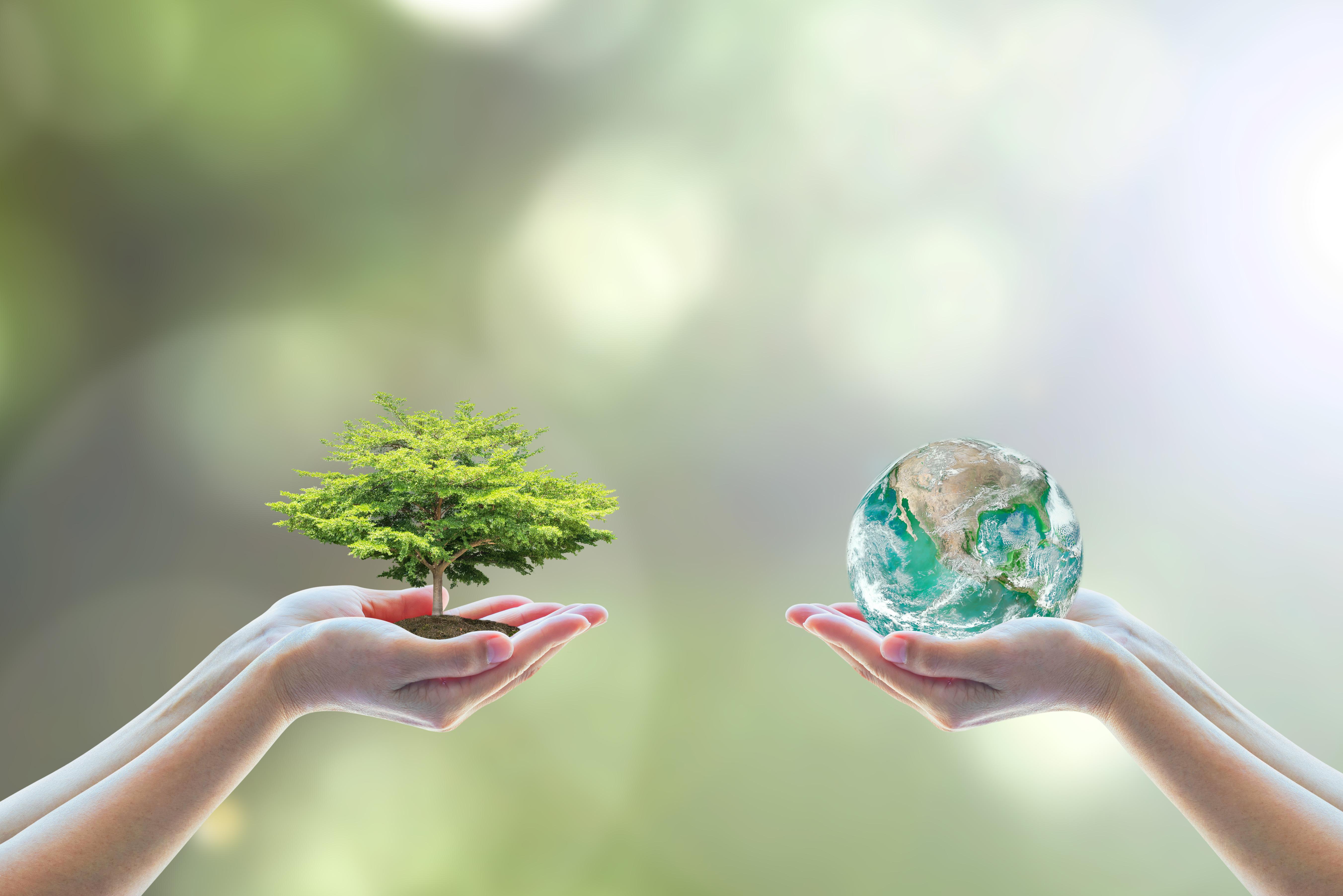 Environmental awareness.jpg